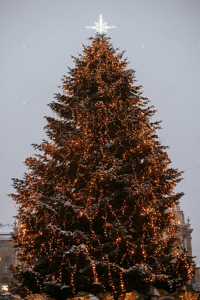 Stylish christmas tree with golden lights and illuminated star on top in european city center
