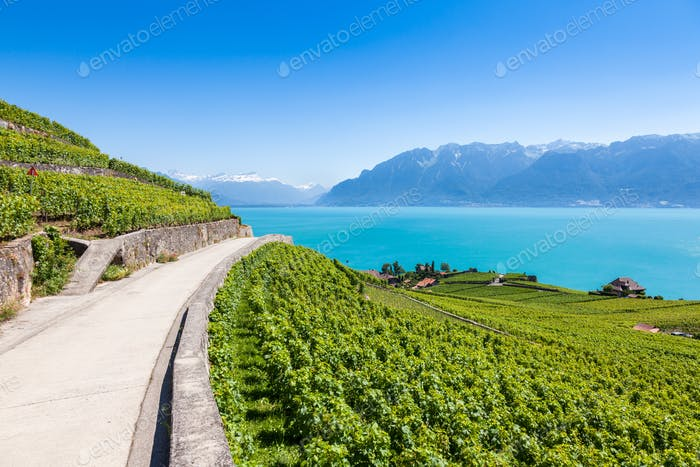 Weinberge in der Region Lavaux - Terrasses de Lavaux Terrassen, Switz