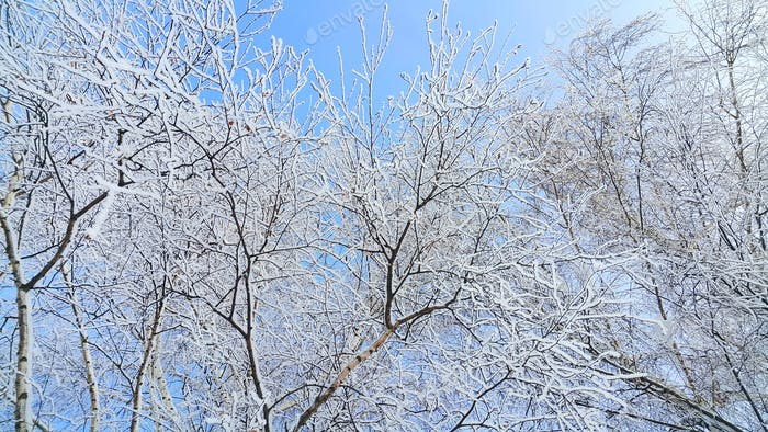 Beautiful branches of trees covered with snow