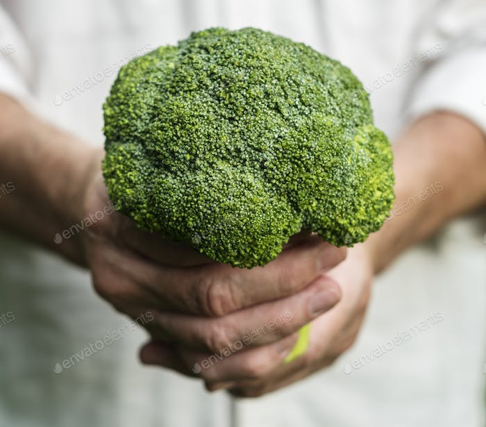 Hands holding broccoli organic produce from farm