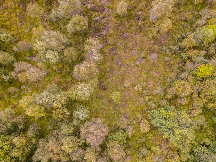 Heathland aerial view