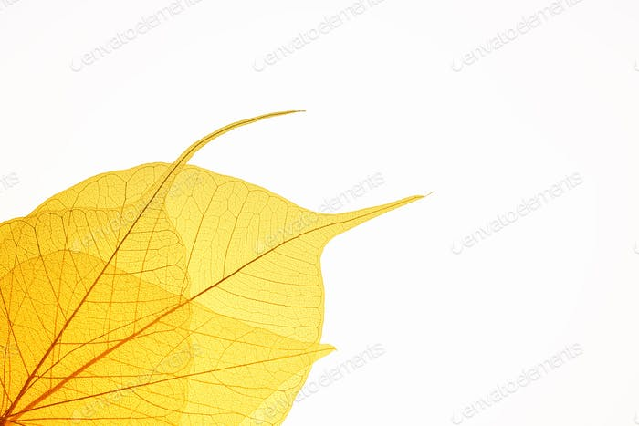 yellow leaf vein background