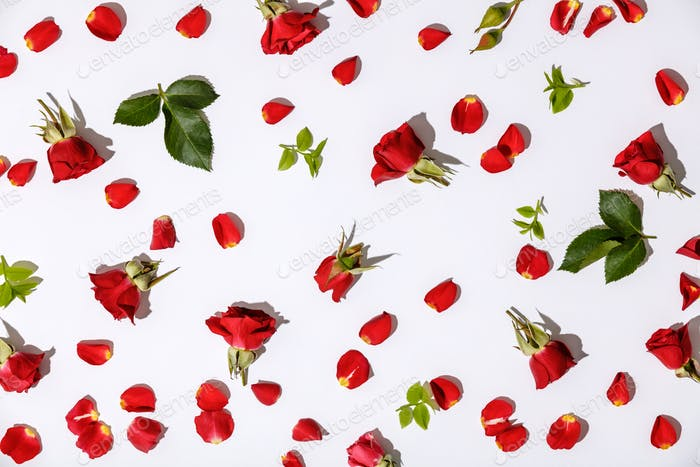 Floral pattern with red roses, petals and leaves on white background