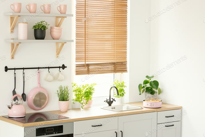 Kitchen tools and accessories, plants, window blades and shelves