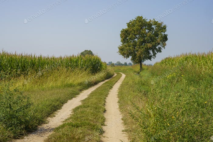 Path in the country near Bereguardo, Pavia, Italy, at September