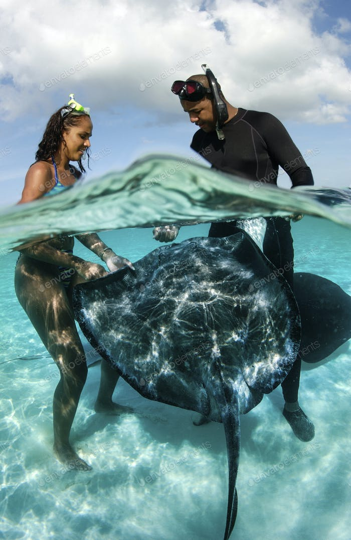 Miss Cayman islands, 2002, interacts with Southern stingrays at the popular tourist site, Stingray