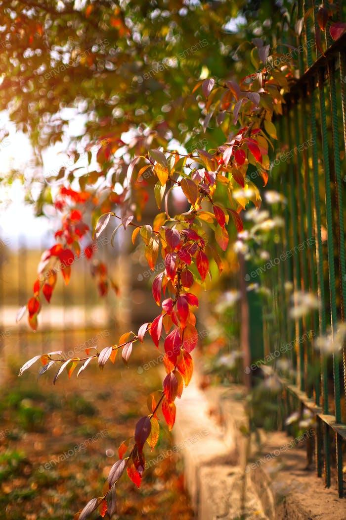 bunte Vegetation in der Herbstsaison