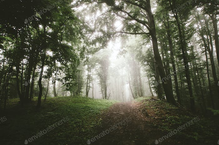 Mysterious forest background path