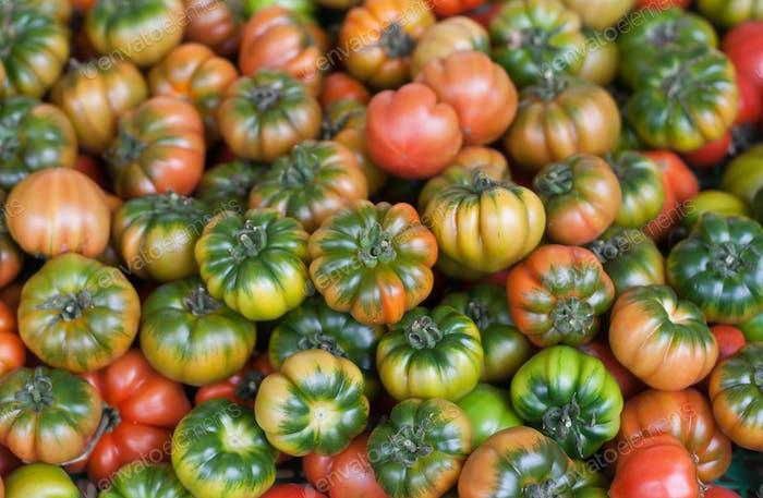 Frische italienische Costoluto Tomaten auf einem Bauernhof im Freien