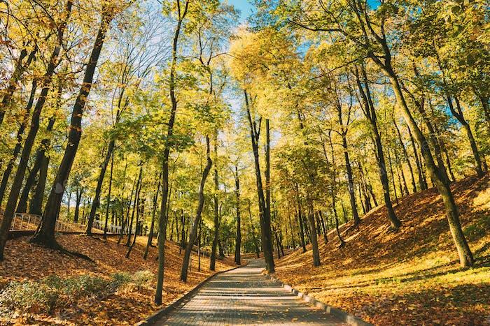 City Park In Autumn Season