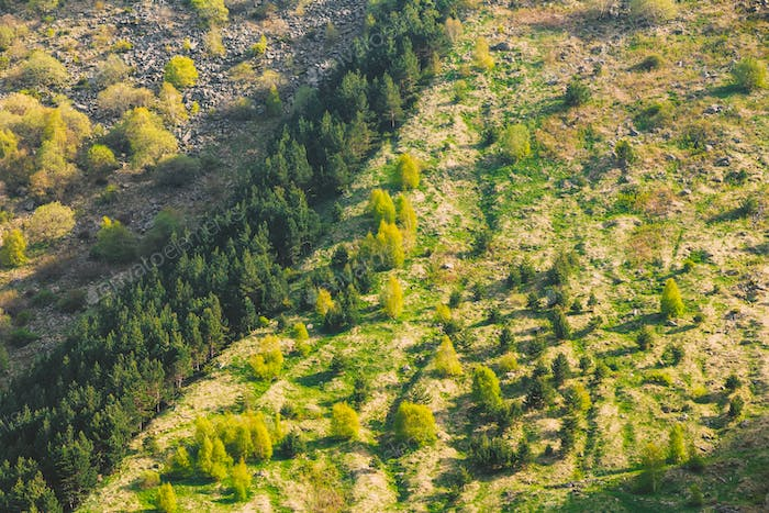 Forest Growing On A Hillside Mountain In Summer Season In Kazbeg