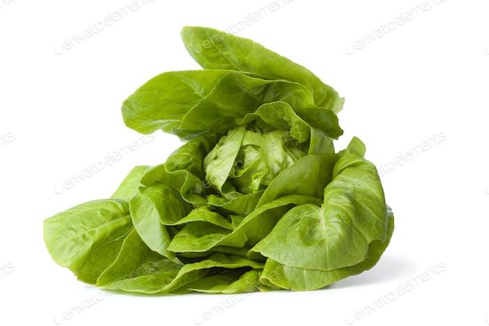 Green little gem lettuce