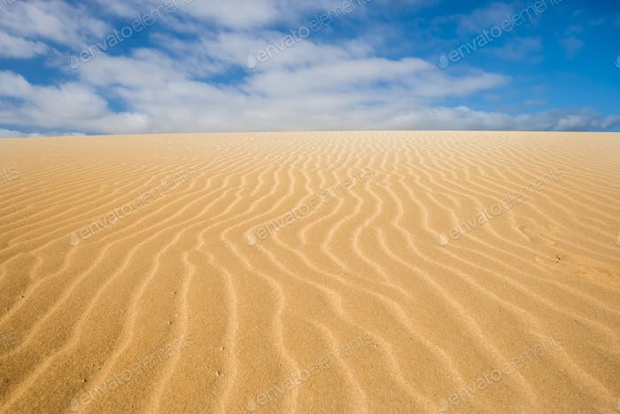 Dunes in the desert of corralejo national park