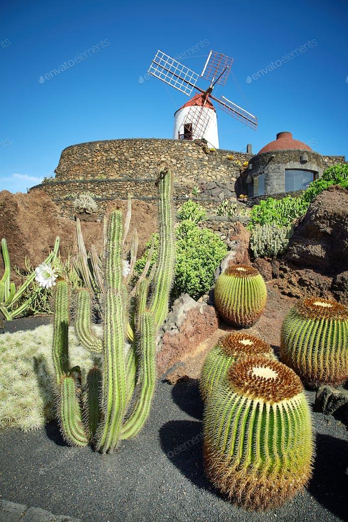 Cactus garden Jardin de Cactus in Lanzarote Island