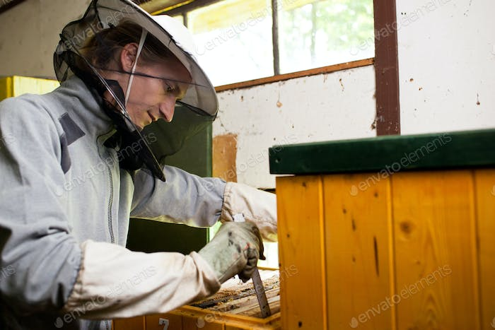 Beekeeper working in an apiary holding a frame of honeycomb cove