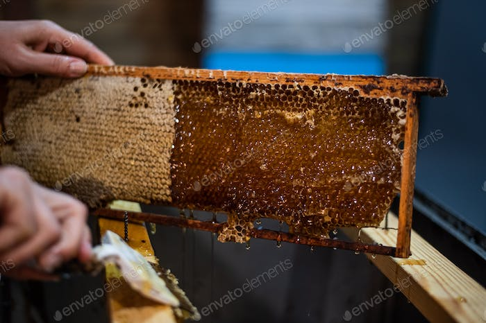 An elderly beekeeper works with frames for honey. Manual labor in the apiary
