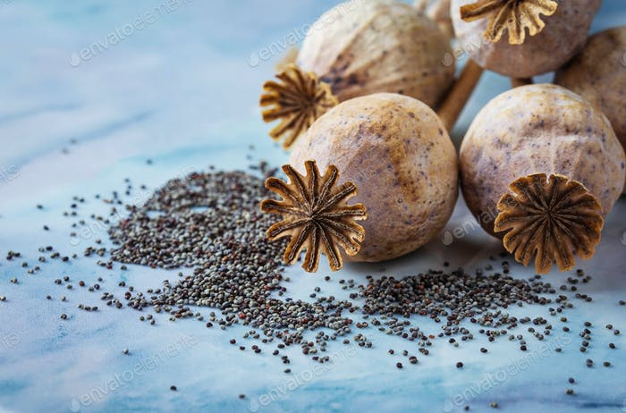 Poppy seeds and heads on wooden background