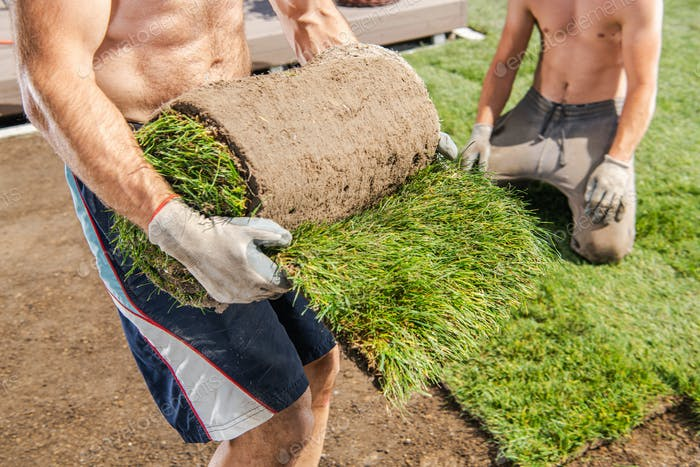 Workers Installing Nature Grass Turfs in a Garden