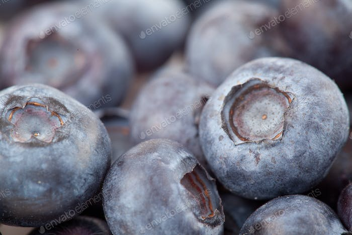 Blueberries  fruit in extreme close-up