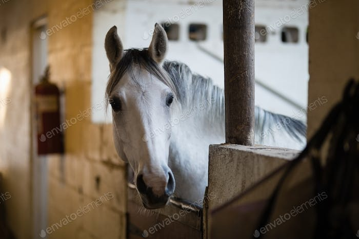 Close up of horse in stable