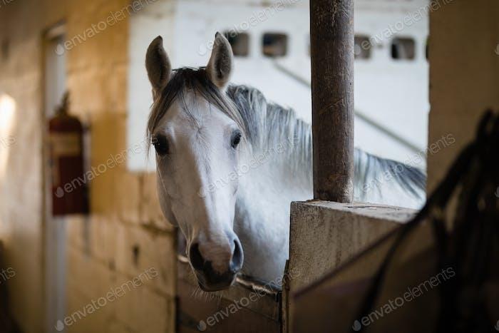 Cerca de caballo en establo