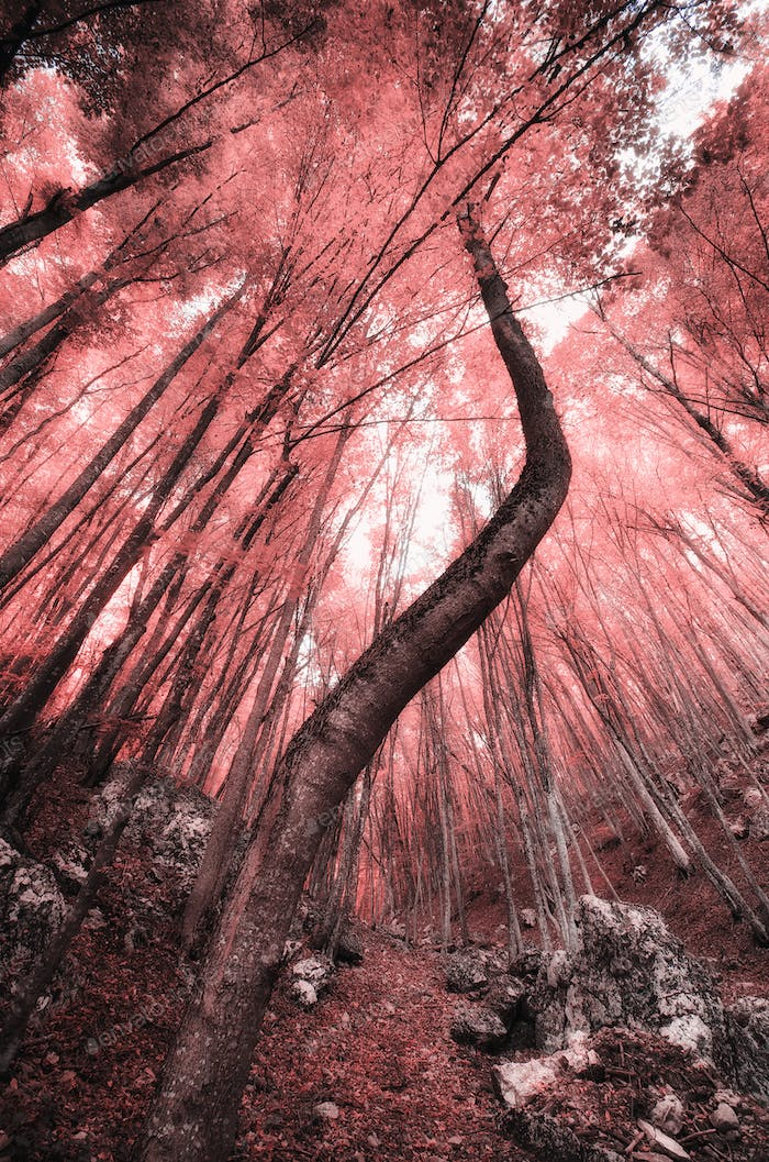 Into the Infrared forest.