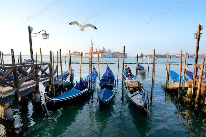 Gondolas and a seagull