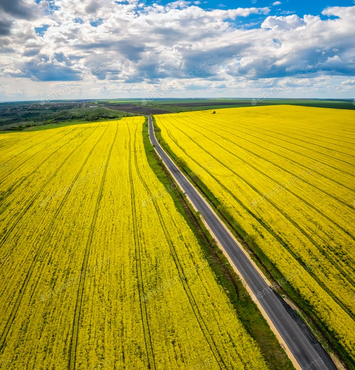 Rapeseed field with road