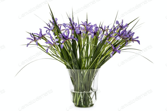 Flowers of Iris pseudacorus in glass vase,isolated on white back