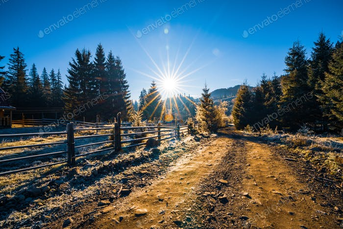 A house on the edge of the forest surrounded by evergreen trees against the backdrop of the sun and