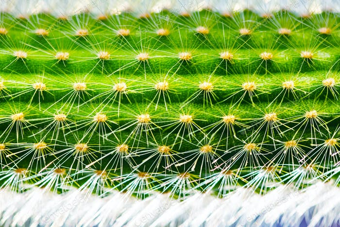 Close-up of a prickly green cactus texture