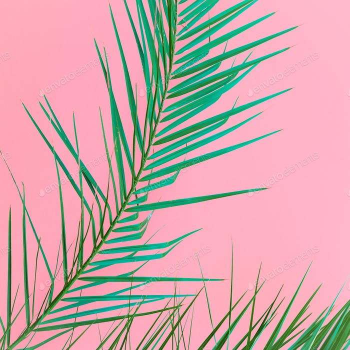 Plant on pink. Palm leaf. Minimal