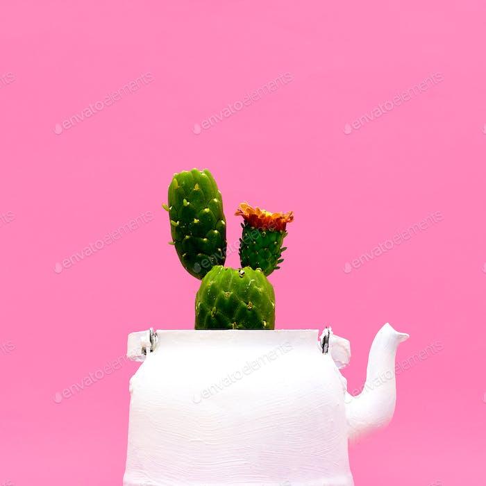 Cactus in a teapot. Minimal style design