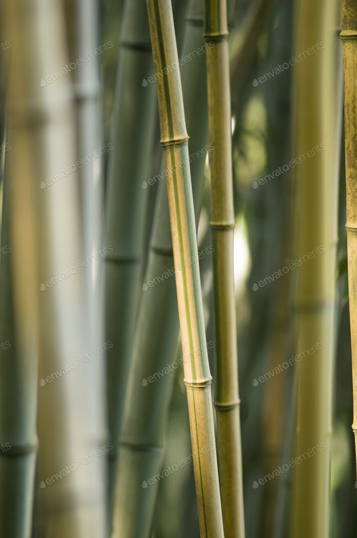 bamboo stems closeup