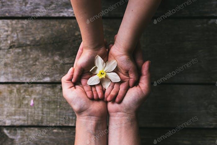 Pais e crianças mãos entregando flores