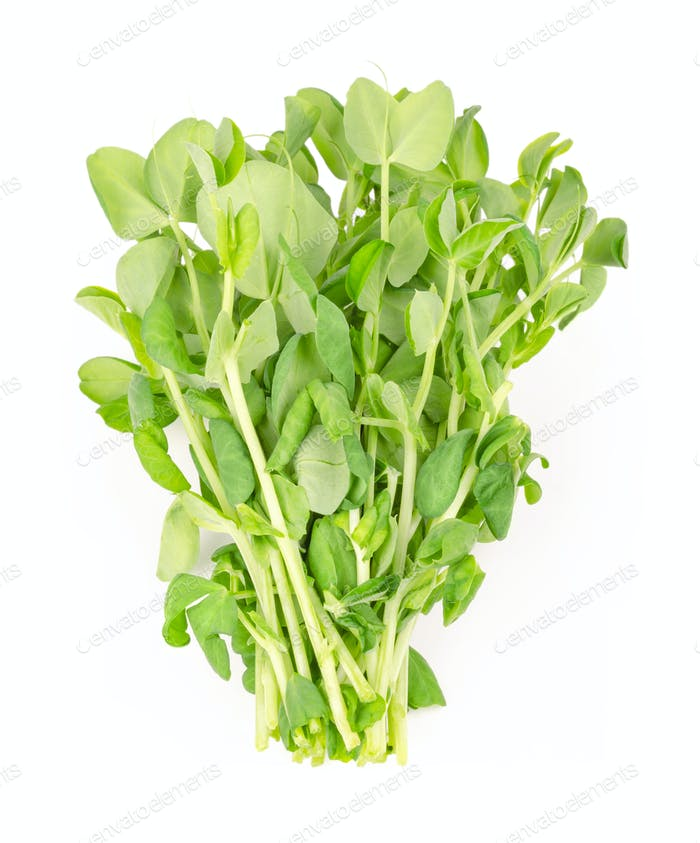 Bunch of snow pea microgreen from above