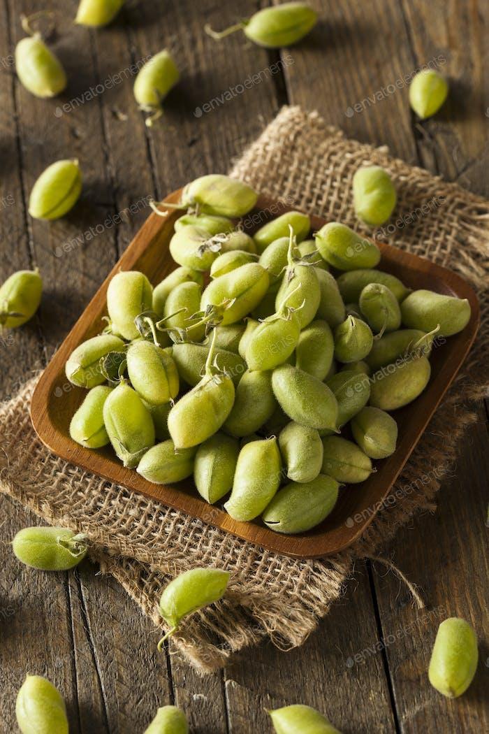 Raw Fresh Organic Green Garbanzo Beans