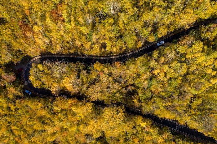 Luftaufnahme über Ansicht der epischen bunten Herbst Wald gewundenen Straße, Serpentin, Drohne Sicht