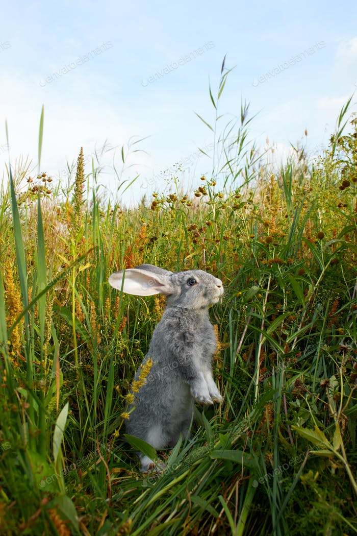 Bunny in grass