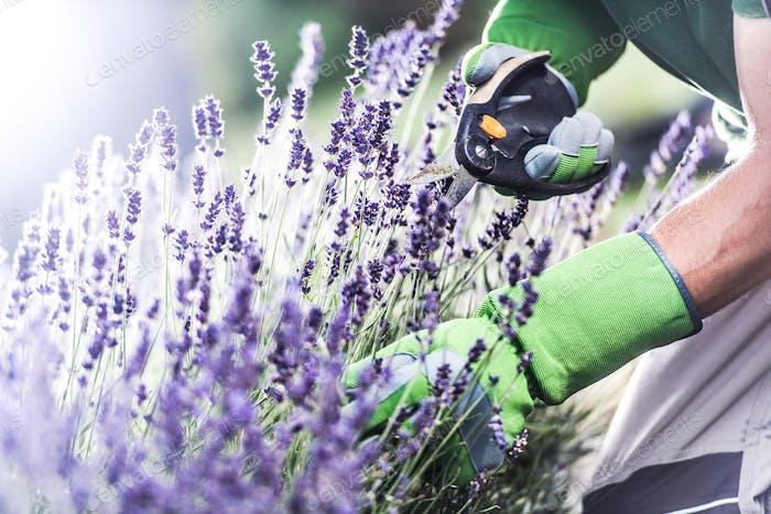 Blumen und Gartenarbeit