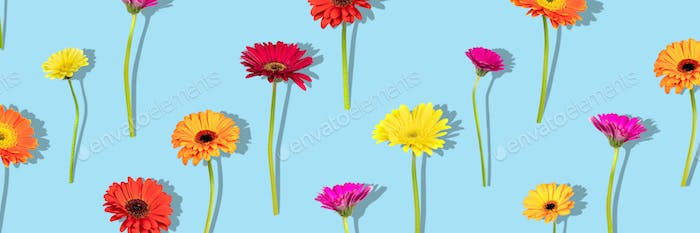 Floral arranged composition with different colors gerbera flowers with shadow on blue background.