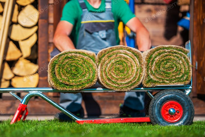 Grass Turfs Rolled on a Cart