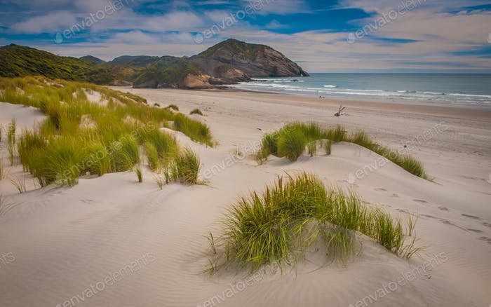 Dune vegetation on Wharariki Beach South Island New Zealand