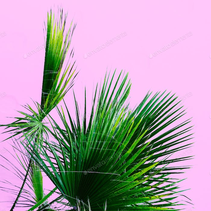 Palm tree on the pink. Tropical design minimal
