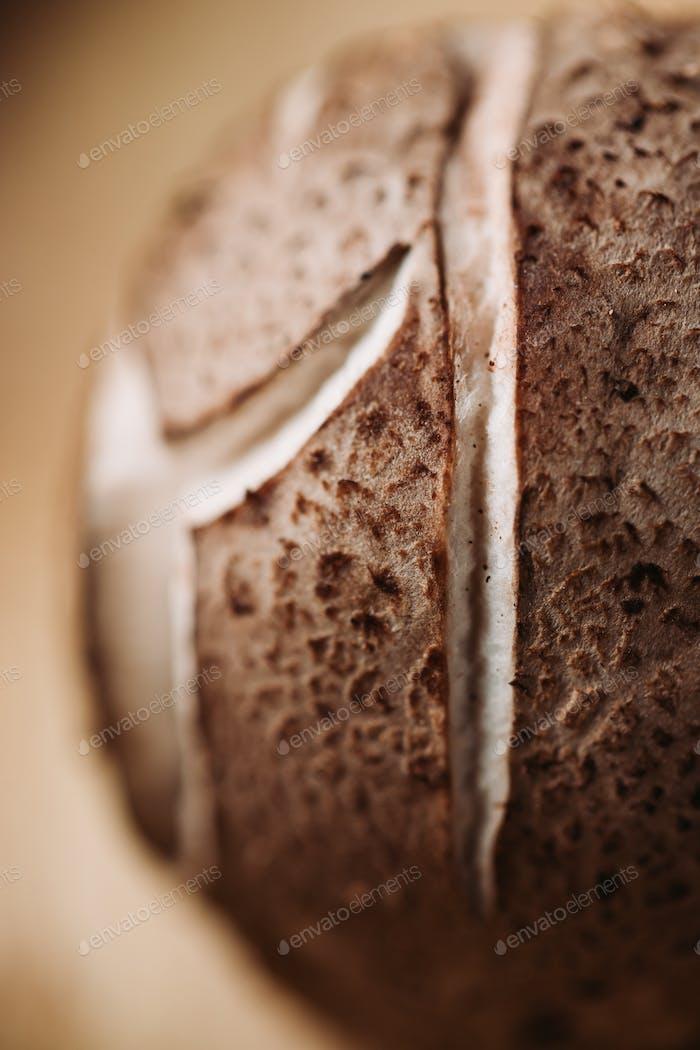 Macro photography of shiitake mushroom