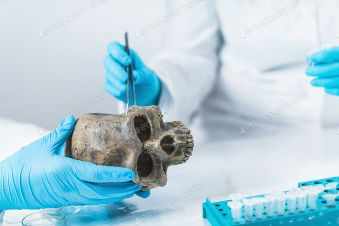 Bioarcheology.  Archaeologist Analyzing Ancient Human Osteological Material in Laboratory