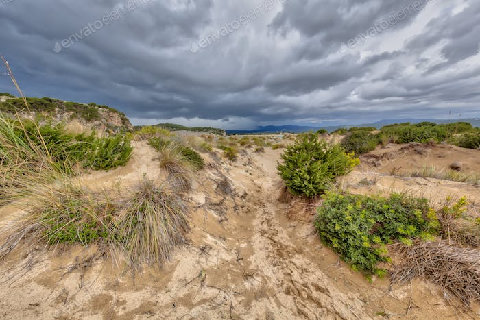 Dune vegetation Voidokilia beach