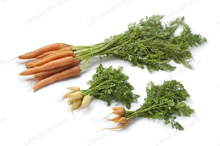Fresh large and mini carrots