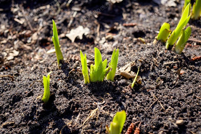 new sprouts in springtime