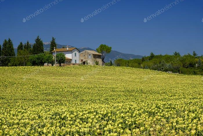 Typischer Bauernhof in Umbrien (Italien) im Sommer